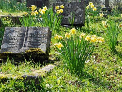 Der Frühling kehrt auf dem Friedhof ein