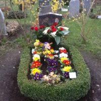 Bunte Primeln Grabgestaltung Erdhügel im Frühjahr