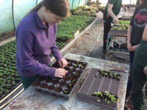 Pflanzenproduktion Zierpflanzenbau