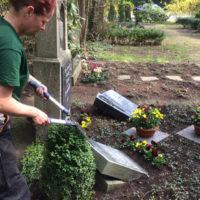 Thema: Grabpflege Leipzig - Schnitt von Bodendeckern und Rahmengehölzen