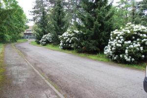 Weg mit Rhododendron verschönert