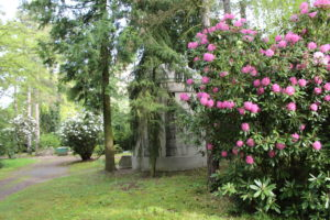 Grabstätte hinter Rhododendron