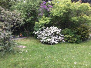 Rhododendron Südfriedhof Leipzig