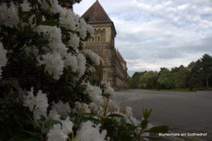 Krematorium Südfriedhof - Rhododendron
