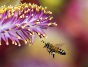 Blumenhalle am Südfriedhof - Biene mit Blüte