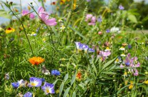Blumenhalle am Südfriedhof - Blumenwiese