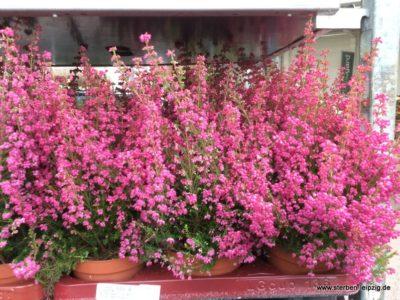 Unsere Pflanzen im Herbst – Herbstpflanzen