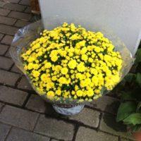 Unsere Pflanzen - Herbstbepflanzung