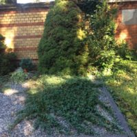 Unsere Pflanzen - Bodendecker