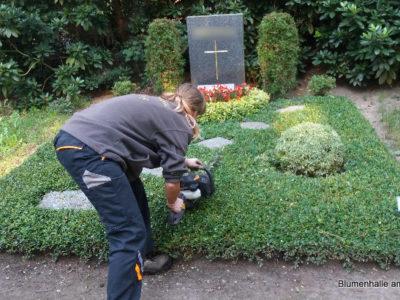 Das Schneiden der Bodendecker – Grabpflege Leipzig