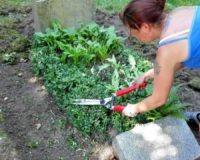 Ältestes Grab - Südfriedhof Leipzig