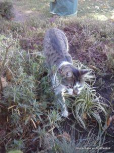 Friedhofsanekdote Katze Liebertwolkwitz