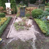 Grabgestaltung auf dem Südfriedhof Leipzig mit Thymian