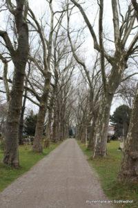 Platanenallee - Friedhof Gohlis