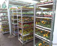 Frühjahrsbepflanzung der Blumenhalle Leipzig