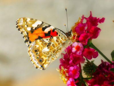 Die Sommerbepflanzung – Grabpflege Leipzig