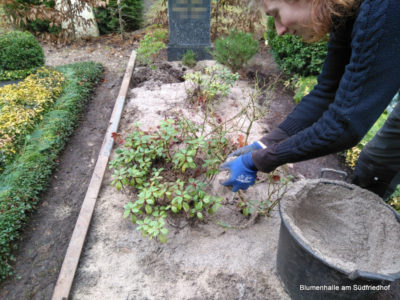 Friedhofsgärtner – Thymian auf nassem Boden?