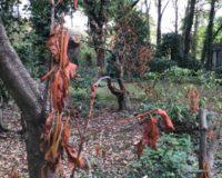 Initiative zur Bewässerung Trockenschäder Suedfriedhof