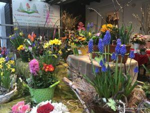 Ostfriedhof Blumenhalle Frühling